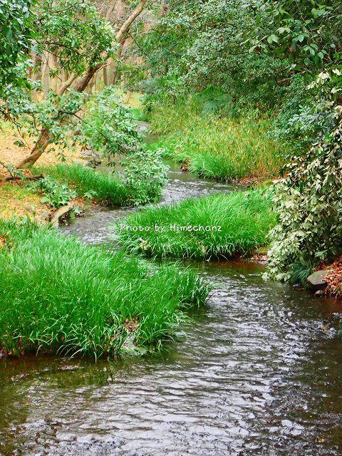 糺の森の川が好きです。