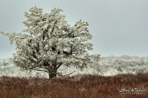 virginia bigmeadows shenandoahnationalpark frozenfog rimeice