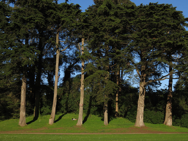 Maite waiting at the trees; Big Rec Baseball Diamond in Golden Gate Park, San Francisco (2015)