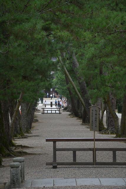 出雲大社:松の参道