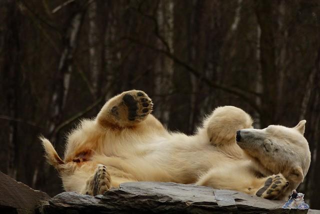 Tierpark Berlin 21.02.2015  0200