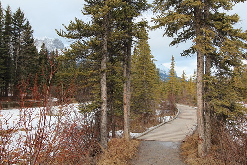 Canmore walking trails | by davebloggs007