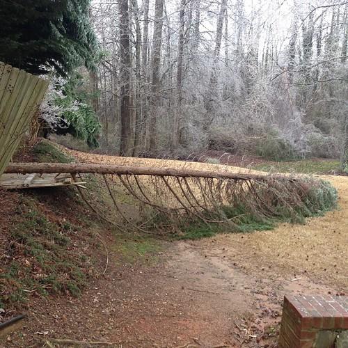 Neighbor's tree due to ice storm last night