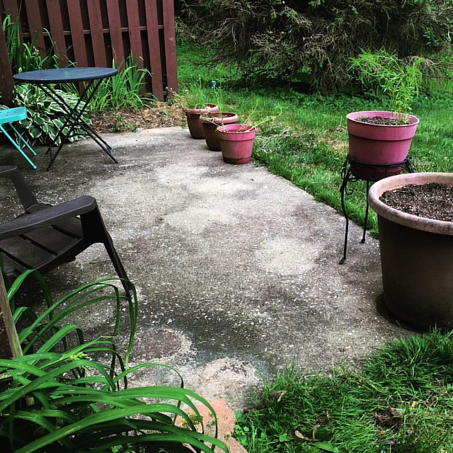 Swept #patiogarden #garden #partio #patios #gettingshitdone #makeitrain