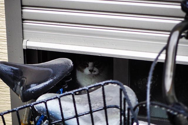 Today's Cat@2016-06-23
