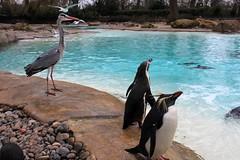 London Zoo 11-03-2013