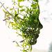 Face Plant by acearchie