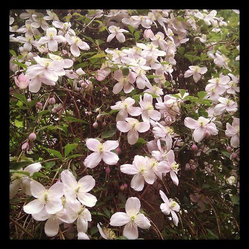 Bloemenweelde in onze tuin. Weet iemand welke bloemen dit zijn? #dtv
