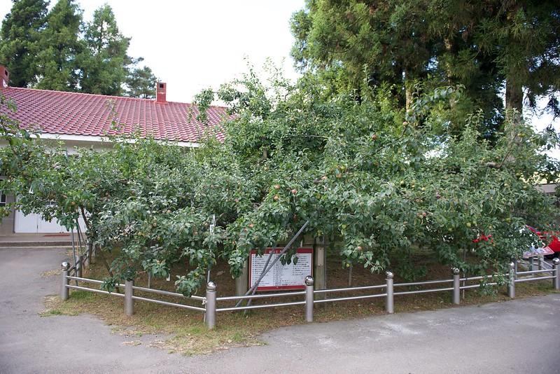 福壽山農場蘋果王