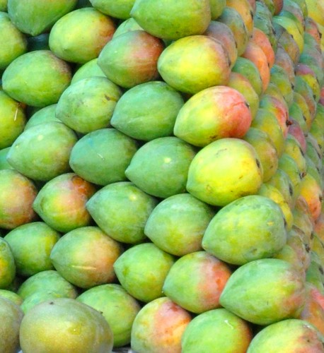 Delicious Raspuri Mangoes (Fully mature, yet to ripe)