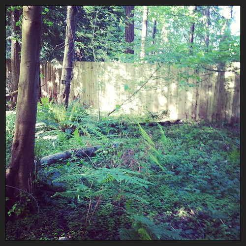 Loving the forest area of our backyard today. #yard #trees #forest #ferns