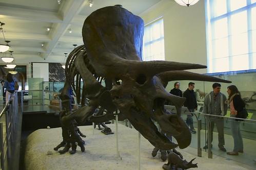5.15 - Triceratops