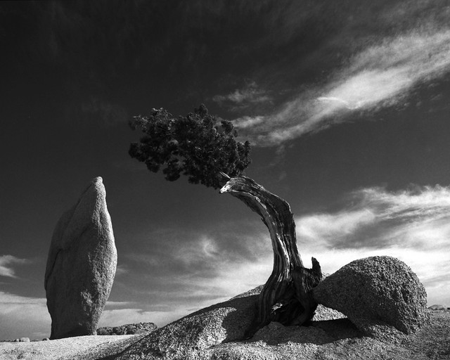 Balanced Rock and Juniper