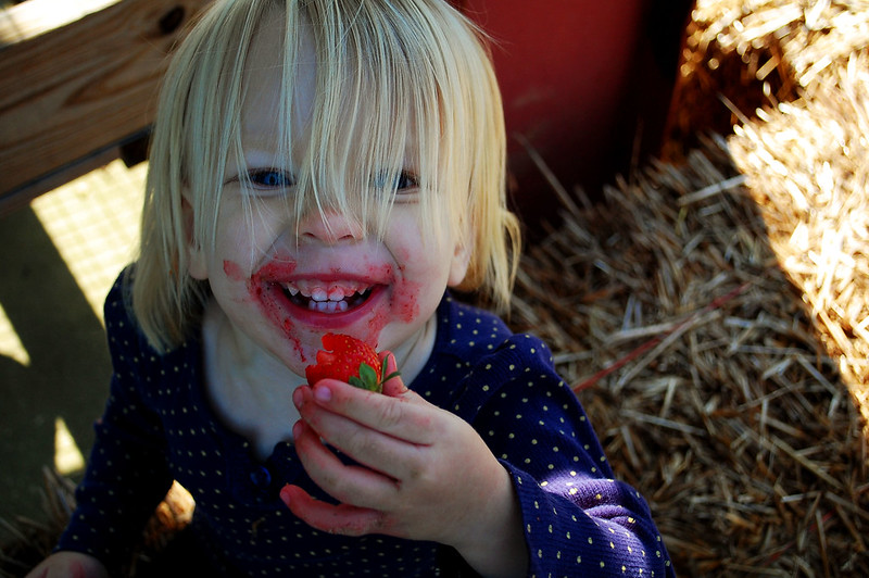 Somebody loves strawberries.