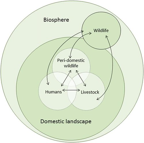 Pathogen flow at the wildlife–livestock–human interface