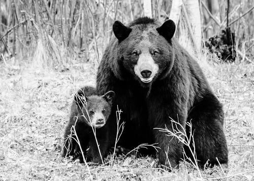 2013 05 19 Bears
