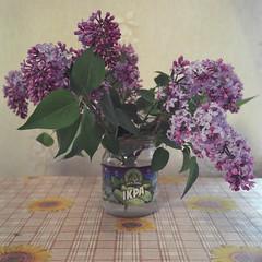 art(0.0), painting(0.0), flower arranging(1.0), cut flowers(1.0), flower(1.0), purple(1.0), violet(1.0), artificial flower(1.0), floral design(1.0), plant(1.0), lilac(1.0), lavender(1.0), houseplant(1.0), flower bouquet(1.0), floristry(1.0), still life(1.0),