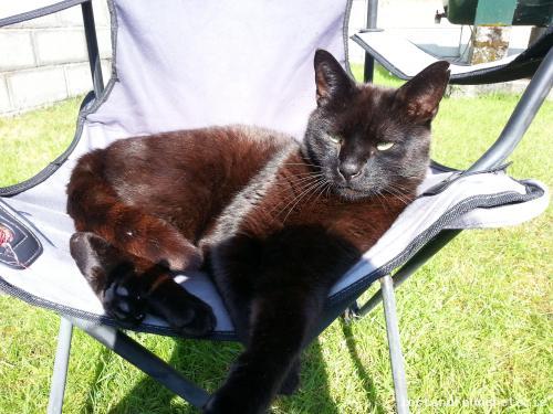 Tue, Jun 11th, 2013 Found Female Cat - Woodglade, Fenagh, Carlow
