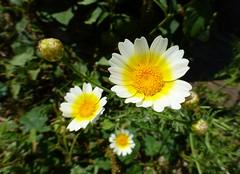 wildflowers - Turkey & Greece