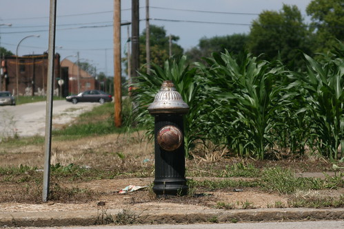 Urban Corn Crops in St. Louis Place