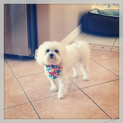 Madison got his hair cut today :)