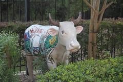 "IMG_0508 Cow ""Morning Moo"""