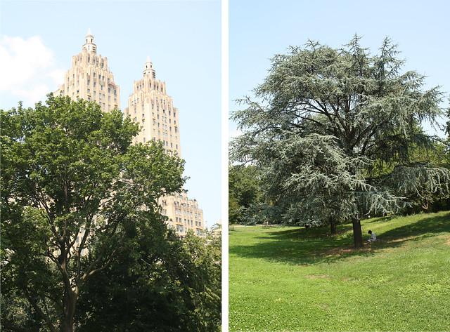 buildings & tree