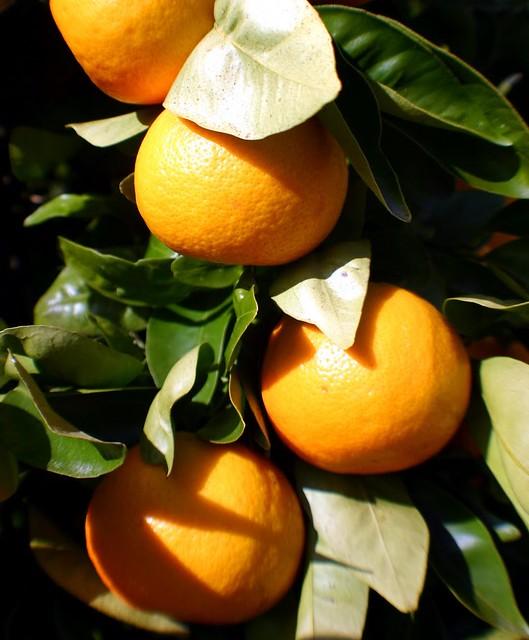 Mandarinetto: Liquore al Mandarino Bimby