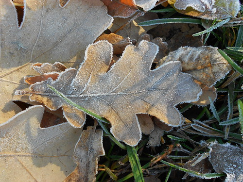 первый мороз дубовый лист