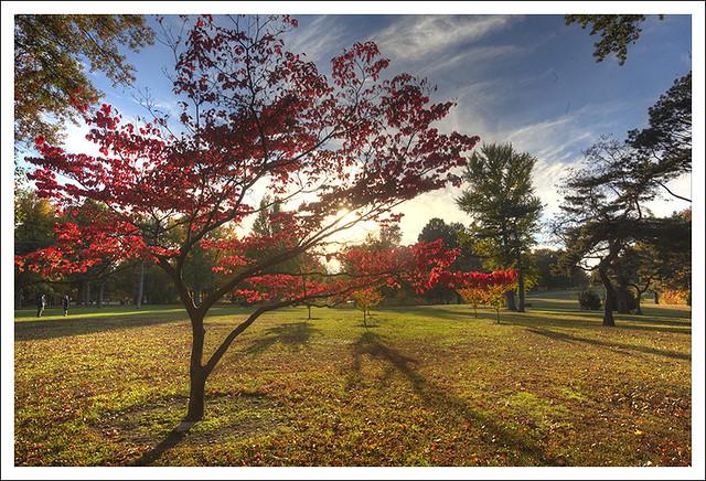 2013-11-01 Tower Grove Park 1