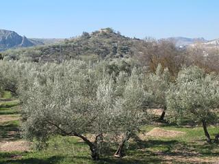 Campos de Baena.