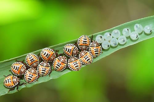 小型昆蟲的記錄,用單眼相機加上微距鏡頭才可以得心應手。