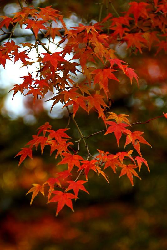Autumn, Nara Koen