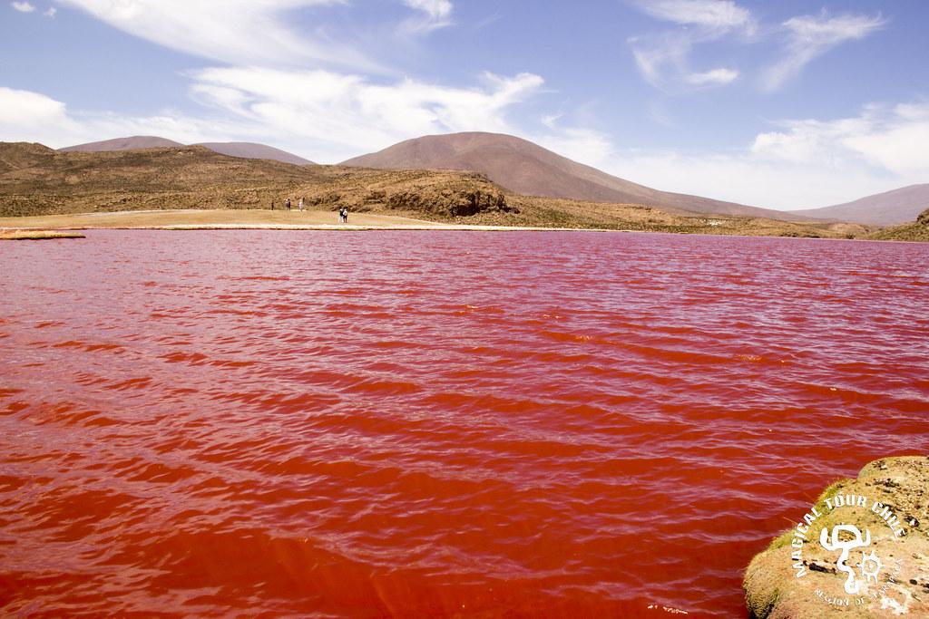 Laguna Roja y Camiña