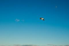 Möwen in Blau / Sea gull in blue