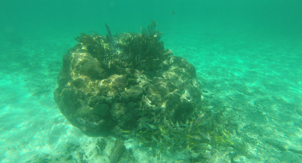 Yucatan trip photos from snorkling 11975927303_5aaa4d744e_b
