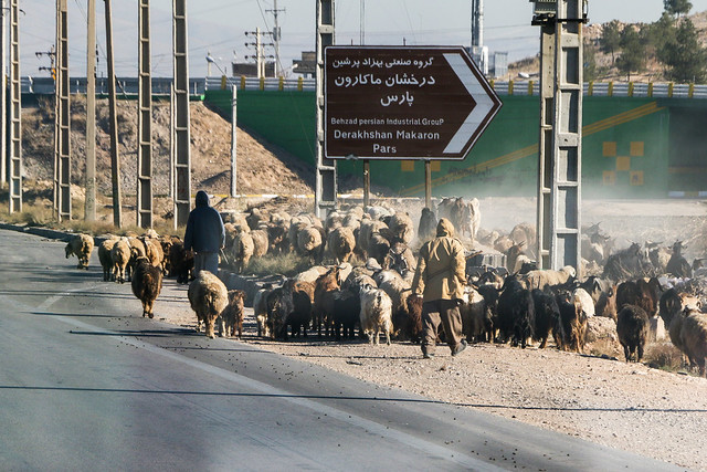 Sheeps and shepherds walking on the road, near Shiraz シラーズ近郊、羊たちと羊飼い