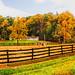 A Peek at a Ranch_edited-1