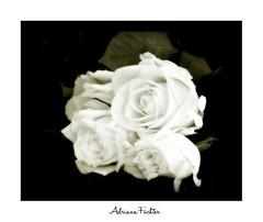 Coleção: Flores - Fragrâncias