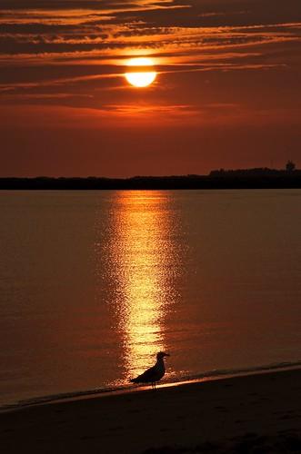 ocean sun beach nature sunrise outdoors bay nikon gull delaware nikkor lewes goldenhour shorebird delawarebay lewesde randyroberts 57rroberts