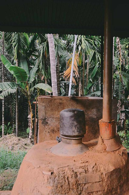 Goa -Feni Fermentation   A Brown Table