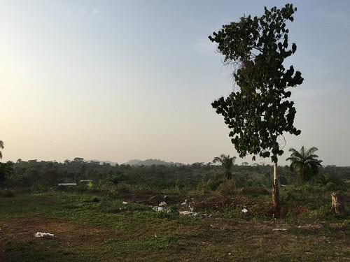 flowers trees landscapes liberia ebola tappita