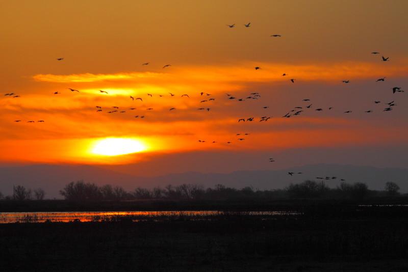 IMG_0923 Sunset at Merced National Wildlife Refuge