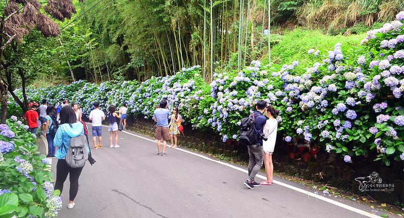 繡球花 (3)