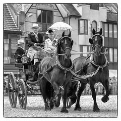 Paardenmarkt te Torhout 2016