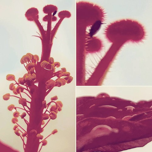 Salve a beleza comum da natureza. #flor #flowers #natureza #nature #macro #instagram #instapic #instasize #instalove #instadaily #instaart #instaartist #instaphoto #instaphotography #photo #photooftheday #instacool #beleza #pic #picoftheday #beautiful #aw