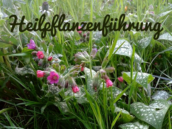 Heilpflanzenführung in Berlin