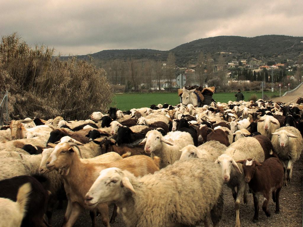 Rebaño, pastor y burro en una cañada. Autor, Jaciluch