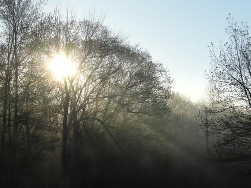 morning trees light sun fog sunrise daylight spring sonydsch55