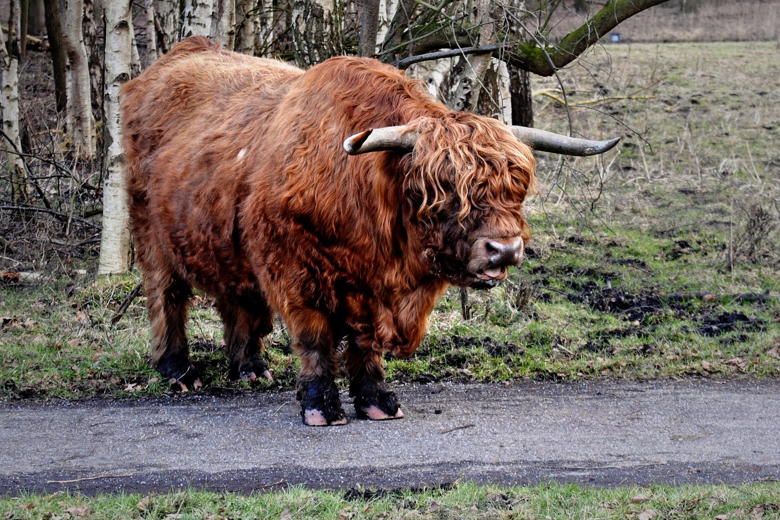 A Scottish Highlander in the Amsterdamse Bos